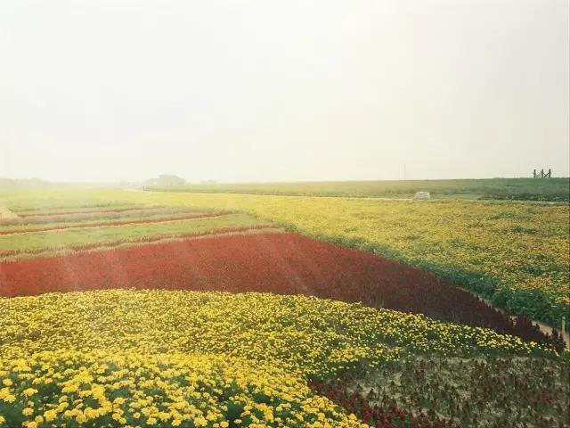 免费观赏!四平丛泉湖花海正艳,快来享受这秋季最后的浪漫!